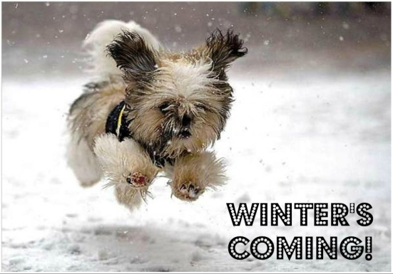 winter-running-dog